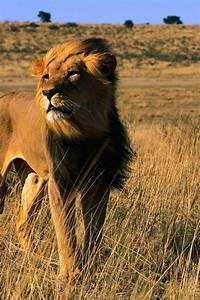 African+Jungle+Animals | Iphone Jungle Animal Animal ...