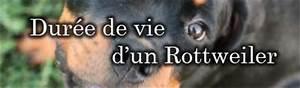 Durée De Vie D Un Moucheron : quelle est la dur e de vie d 39 un rottweiler ~ Farleysfitness.com Idées de Décoration