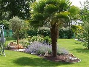 massif de palmiers et yuccas jardin pinterest With modele de jardin moderne 0 1001 conseils et modales pour creer une parterre de fleurs