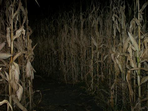 cache bureau corn mazes cache valley visitors bureau