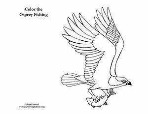 Osprey Fishing – Coloring Nature
