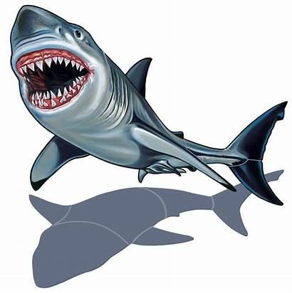 Shark Clip Clipartpanda Clipart Terms