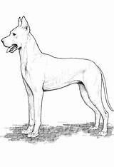 Dane Coloring Dog Enregistree Depuis sketch template
