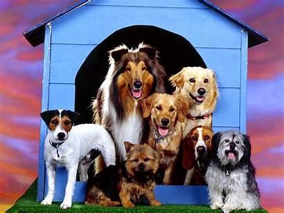 Dog Breed Backgrounds Desktop Wallpapers Animal Mobile