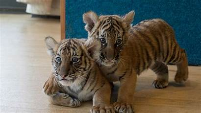 Animal Planet Zoo Bronx Behind Scenes Maher