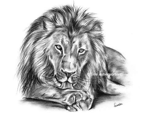 Lion Charcoal Sketch By Tinesdierportretten On Deviantart