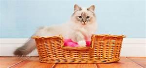 Pflegeleichte Haustiere Wohnung : sind katzen in einer mietwohnung erlaubt oder verboten ~ Yasmunasinghe.com Haus und Dekorationen