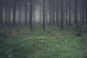 Picalls.com | Pine forest by Fritz Bielmeier.