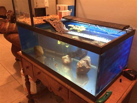 turtle tank topper turtle pinterest turtles turtle tanks  tanks