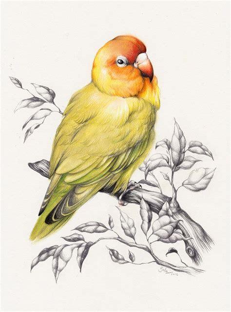 cover  idea  water colored love bird  top