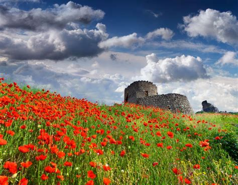 Sky Poppies Clouds Nature Flower Wallpaper 5140x4000