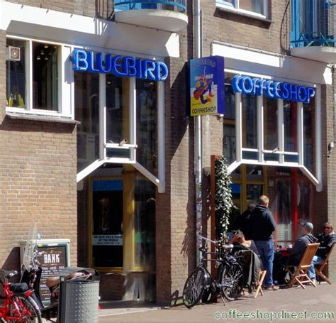 Great coffee starts with community in mind. Bluebird - Amsterdam Coffeeshop Directory