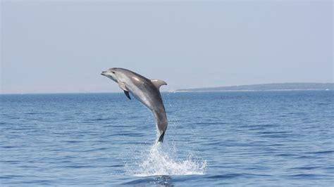 il sentiero dei delfini