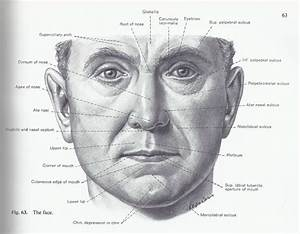 135 Best Images About Head And Face Drawing References On