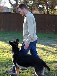 Precision k9 work dog obedience austin for Precision dog training