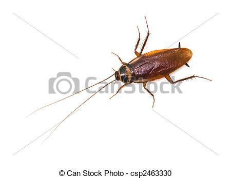 insecte de cuisine insecte cuisine les ustensiles de cuisine