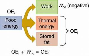 Work  Energy  And Power In Humans  U00b7 Physics