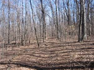 Mt. Magazine Trail (Cam. Bluff-Cove Lake) - 10 mi (ptp ...