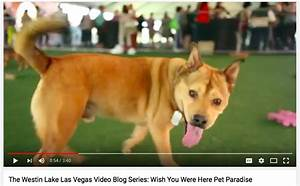 Dog friendly westin lake las vegas bodie on the road for Dog days las vegas