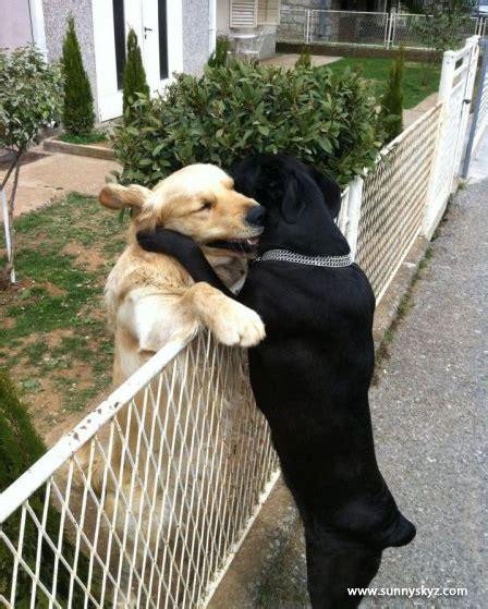 dog friends hug hugging hugs