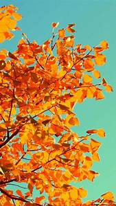 Fall Tree Art iPhone 5s Wallpaper Download | iPhone ...
