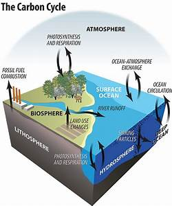 27 Best Images About The Carbon Cycle On Pinterest