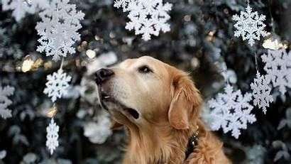 Christmas Dogs Dog Wallpapers Holiday Boxer Snow