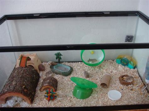 aquarium für hamster 10 best images about hamster aquarium on home