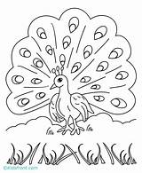 Peacock Coloring Pages Print Printable Sheets Animal sketch template