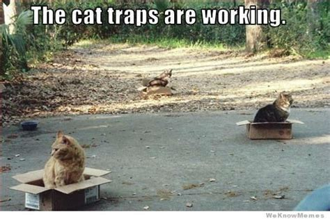 Cat Trap Meme - story of cats boxes and bookcases life with dogs and cats