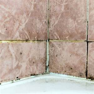 What is black mold the family handyman for Mildew on walls in bathroom