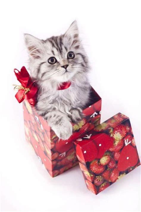 gato para navidad