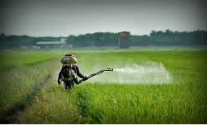 Pesticides and Testosterone  Herbicides  Fungicides  Insecticides  etc      Pesticides And Herbicides