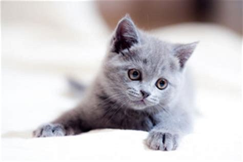 gray cat names gray cat names 36 ideas for cats with grey hair