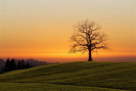 photo landscape  silhouette  solitaire tree