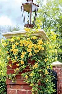 Die Schönsten Gartenbäume : 323 besten garden bilder auf pinterest g rtnern garten ~ Michelbontemps.com Haus und Dekorationen