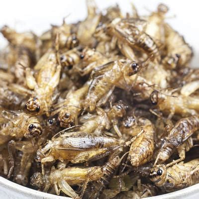 psoques cuisine petites bêtes dans la farine le sucre