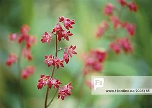 Winzige Rote Tierchen : anpflanzen blume bl hen bl te botanik farbe lizenzfreies ~ Lizthompson.info Haus und Dekorationen