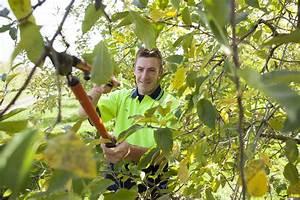 Apfelbaum Schneiden Wann : obstb ume richtig schneiden anleitung vom experten plantura ~ Watch28wear.com Haus und Dekorationen