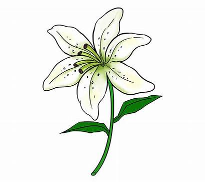 Drawing Hyacinth Lily Flower Easy Water Step