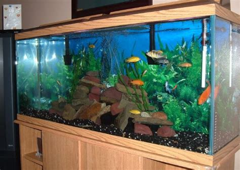 how to clean a fish tank lone star blog beauty and lifestyle blogger