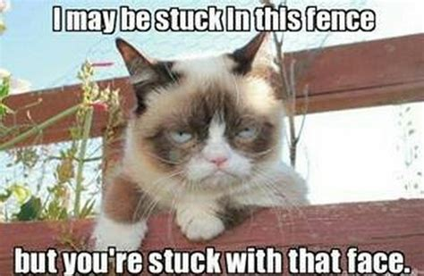 Grumy Cat Memes - ultimate grumpy cat compilation 17 pics