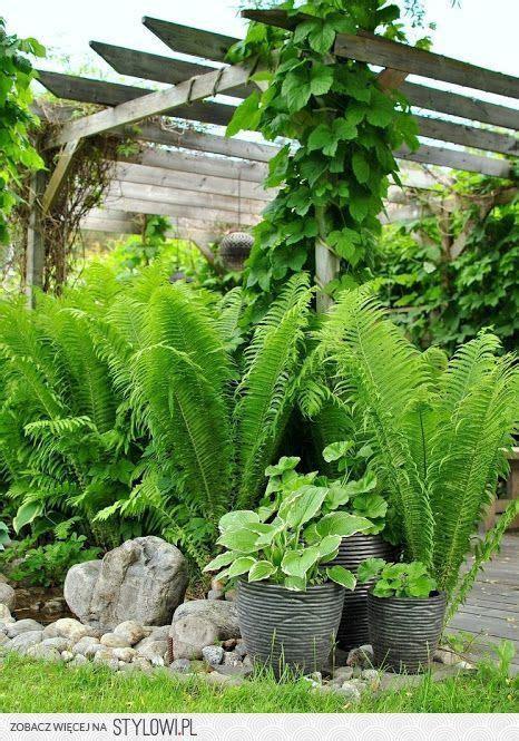 stone ferns pergola hostas planters  plant