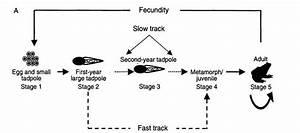 Bullfrog Life Cycle Graph  For British Columbia  Showing