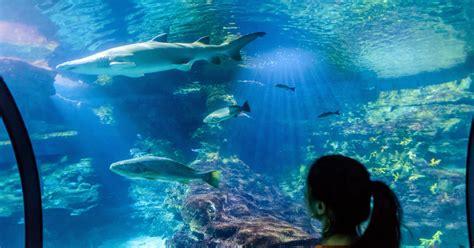 barcelona aquarium skip   admission ticket