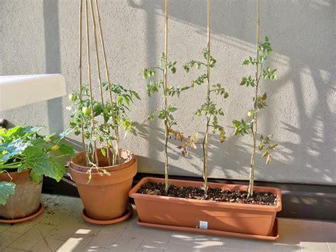 vaso per pomodori orto sul balcone erbaviola grazia cacciola
