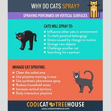 Why Do Cats Spray?  Cool Cat Tree House