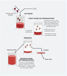 What Is Whole Bunch Fermentation  Ask Decanter