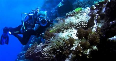 great barrier reef tours trips  australia
