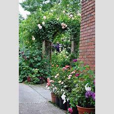From Blah Lawn To Backyard Rose Garden Paradise Best